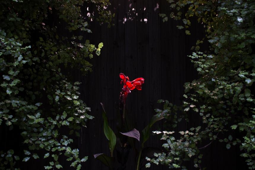 A photograph by Alysha Jakobi as published in Photo/Foto Magazine