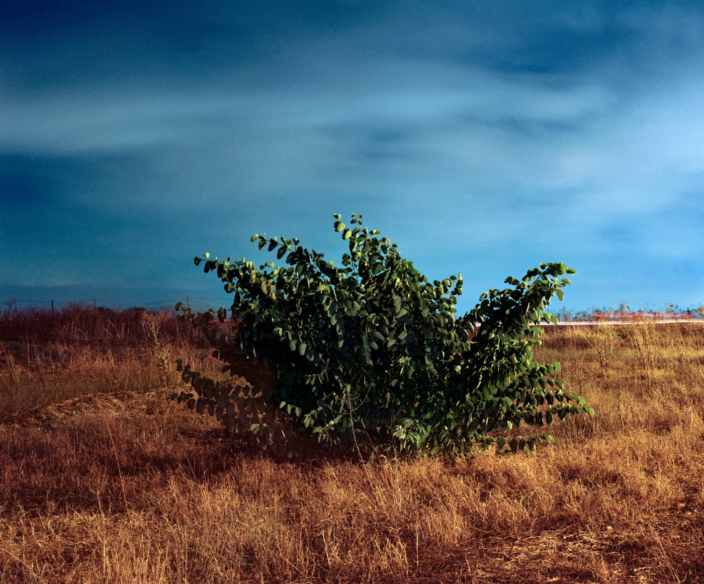 A photograph by Tal Ben Avi as published in Photo/Foto Magazine